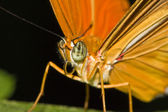 Closeup from a beautiful orange butterfly — Stock Photo
