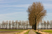 Dutch countryroad in springtime — Stock Photo