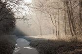 Paesaggio invernale in una foresta congelata — Foto Stock