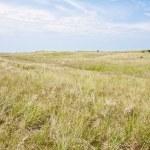 paesaggio di dune lungo la costa olandese — Foto Stock