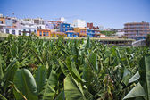 Village near big banana plantation at La Palma — Stock Photo