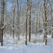 Stock Photo: Winter forest covered with snow, with sun shining through th