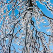 Stock Photo: Branches covered with hoar frost while bright sun is shining