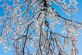 Branches covered with hoar frost while the bright sun is shining — Stock Photo