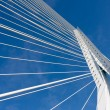 Detail of the cable stayed Erasmus bridge in Rotterdam, the Net — Stock Photo #9325217