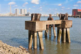 Piles of an old jetty in the harbor of Rotterdam, The Netherland — Stock Photo