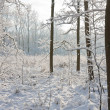 Snowy winter forest with the sun shining through the trees — Stock Photo #9921337