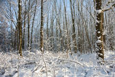 Snowfall in bare forest — Stock Photo