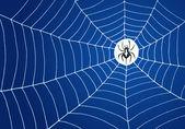 Araignée et illustration nette — Vecteur