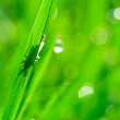 Breen grass background - Stock Photo