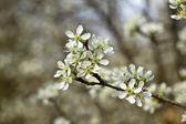 Bahar çiçek — Stok fotoğraf