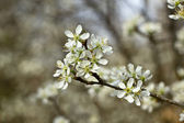 Spring flower — Stockfoto