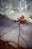 Crack in asphalt vertical — Photo