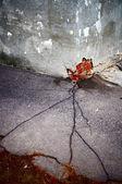 Crack v asfaltu vertikální — Stock fotografie
