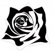 Stock Photo: Rose illustration