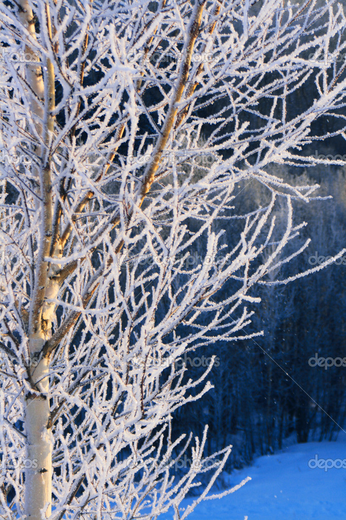 Winter tree — Stock Photo #10588515