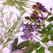 Stock Photo: Background made from healing herbs