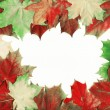 Beautiful autumn  leaves - Stock Photo