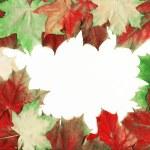 Beautiful autumn leaves — Stock Photo #8096429