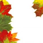 Beautiful autumn leaves — Stock Photo #8096499