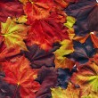 Beautiful autumn  leaves - Stockfoto