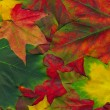 Stock Photo: Beautiful autumn leaves