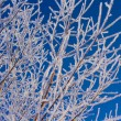 Snow Covered Branches — Stock Photo #8096536