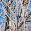 Snow Covered Branches — Foto Stock