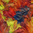 Red autumn leaves - Foto Stock