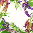 Healing herbs - Stockfoto