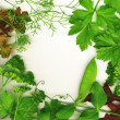 Fresh herbs - Foto de Stock