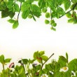 Stock Photo: Spring leaves