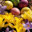 Easter eggs — Foto de stock #8099847
