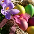 easter eggs — Stock Photo #8099853