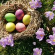 Easter eggs — Stock Photo #8099855