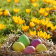 easter eggs — Stock Photo #8099873