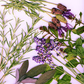 Background made from healing herbs — Stock Photo