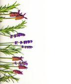 Healing herbs — Stock Photo
