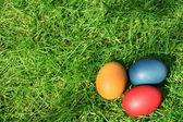 Easter eggs hidden in the grass — Stock Photo