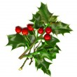 A sprig of holly isolated on a white background — Stock Photo