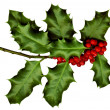 A sprig of holly isolated on a white background — Stock Photo #8100592