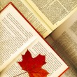 Background made from opened books and maple leaves — Stock Photo #8100788