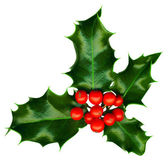 Clipping path. a sprig of holly isolated on a white background — 图库照片