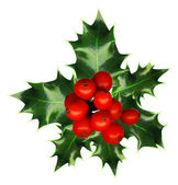A sprig of holly isolated on a white background — 图库照片
