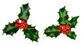 Clipping path. 2 sprigs of holly isolated on a white background — Stock Photo