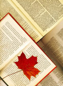 Background made from opened books and maple leaves — Stock Photo