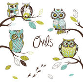 Collection of five different owls — Stock Photo