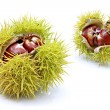 Chestnuts in husk - Stock Photo