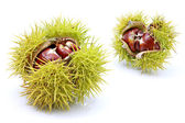 Chestnuts in husk — Stock Photo