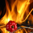 Red savina chili pepper with fire - Stock Photo